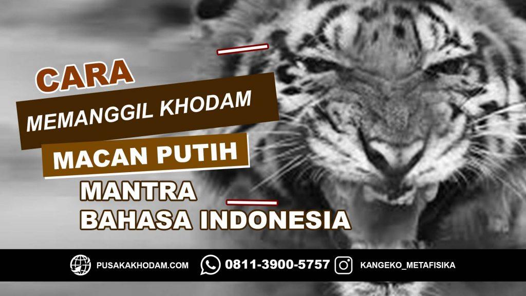 Cara Memanggil Khodam Macan Putih Dengan Mantra Bahasa Indonesia