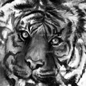 Khodam Macan Putih Soma Arka Warangan a