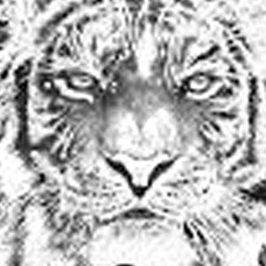 Khodam Macan Putih Blarakmas
